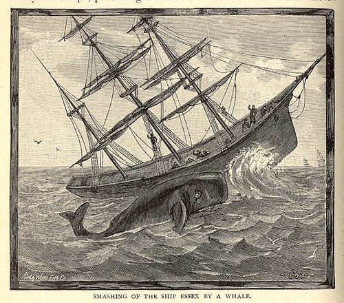 Sperm whale attacking the whaleship Essex.